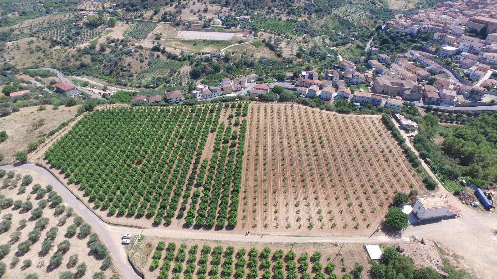 Azienda Agricola di Arcuri Natalina