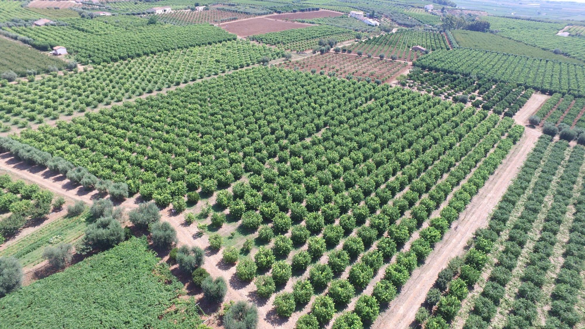 Azienda Agricola di Latronico Caterina