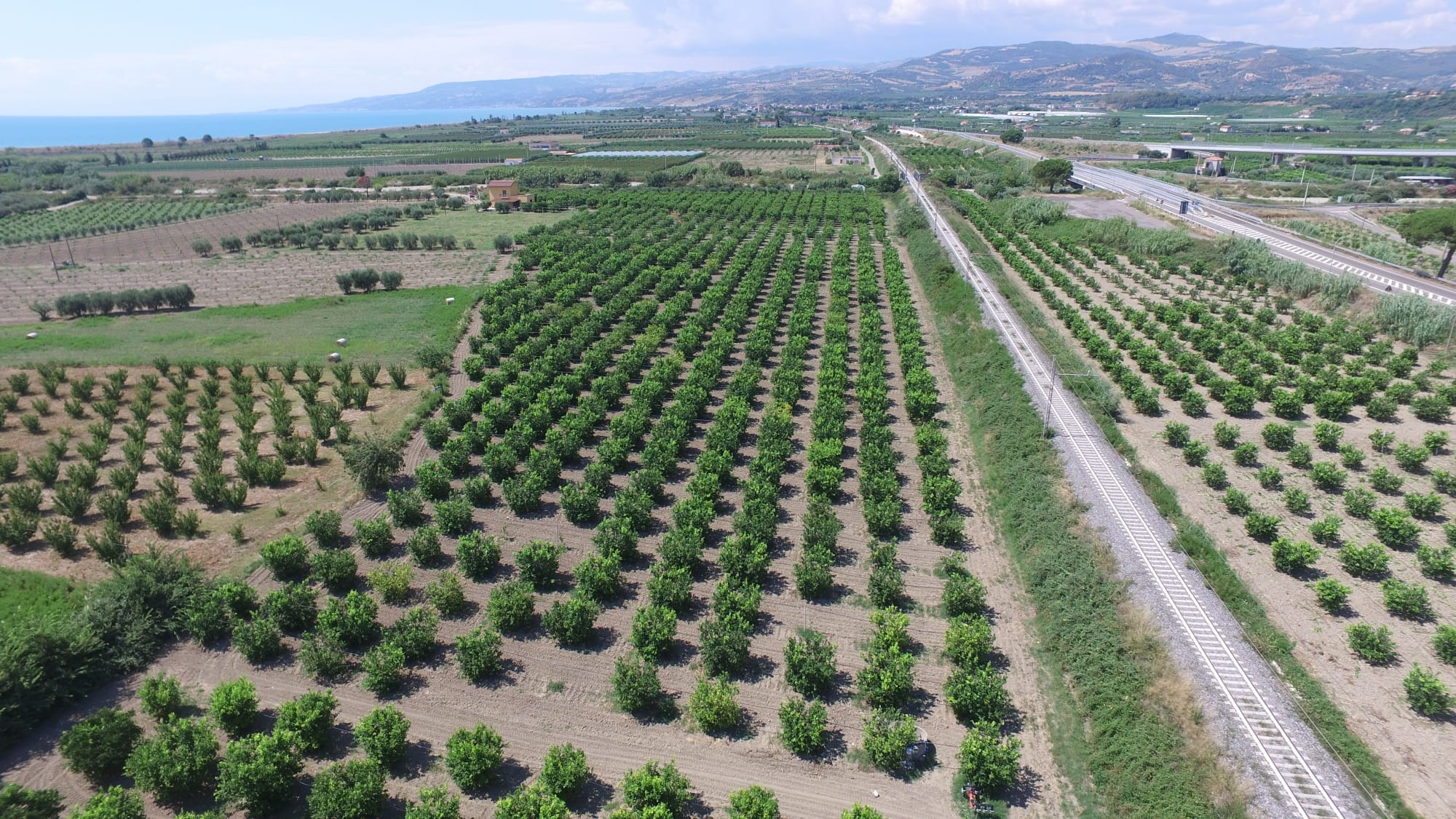 Azienda Agricola di Sprovieri Luca Antonio